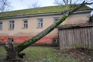 Koks uz internāta jumta